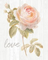 Garden Rose on Wood Love Fine Art Print