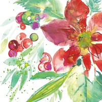 Poinsettia Pretty IV Fine Art Print