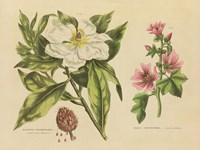 Herbal Botanical II Fine Art Print