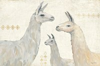 Llama Land IV Fine Art Print