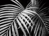 Palm Fronds Fine Art Print