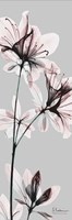 Embraced Azalea Fine Art Print