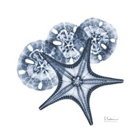 Indigo Starfish and Sand Dollar Fine Art Print