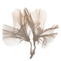 Dry Azalea 1 Fine Art Print