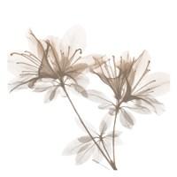 Dry Azalea 2 Fine Art Print
