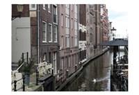 Swan Amsterdam Fine Art Print