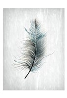 Feathered Dreams 1 Fine Art Print