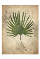 Palms C Fine Art Print