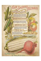 Splendid Vegetables Fine Art Print