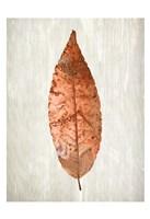 Copper Leaves 1 Fine Art Print