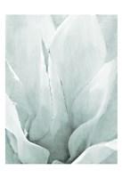 Agave 2 Fine Art Print