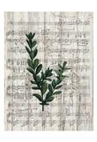 Musical Botanical 1 Fine Art Print