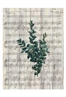 Musical Botanical 3 Fine Art Print