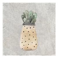 Potted Succulents 1 Fine Art Print