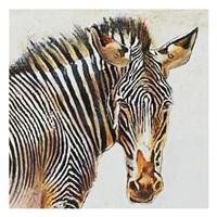 Isolated Stripes Fine Art Print