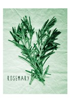 Rosemary Paper Scraps Fine Art Print