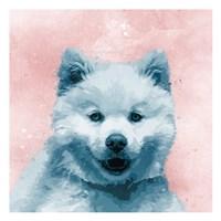 Husky Splat Fine Art Print