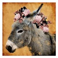 Pretty Donkey Fine Art Print