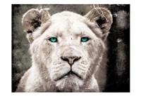 Lioness Look Fine Art Print