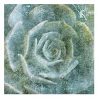 Succulent Through The Fog Fine Art Print