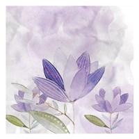 Purple Delight 2 Fine Art Print