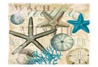 Beach Shells R1 Fine Art Print