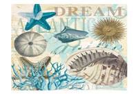 Dream Shells R1 Fine Art Print