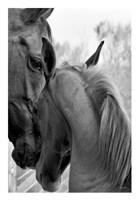 Cheers n' Foal Fine Art Print
