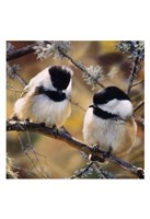 In the Black - Black Capped Chickadees (detail) Fine Art Print