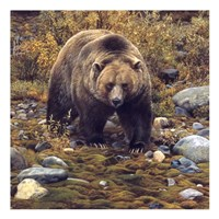 Trailblazer - Grizzly Bear (detail) Framed Print