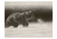 Silvertip Fine Art Print