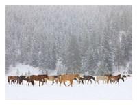 Montana Horses Fine Art Print