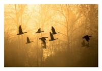 Geese in the Mist Fine Art Print