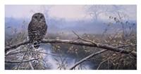 Autumn Mist - Barred Owl Fine Art Print