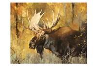 Autumn Moose Study #1 Fine Art Print