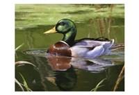 Serene Swim Fine Art Print