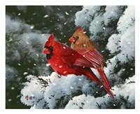 Winter Harmony Fine Art Print