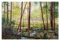 Forest Edge Fine Art Print