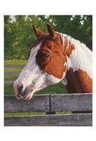 Shotzie - Horse Portrait Fine Art Print