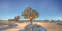 Snow Covered III Fine Art Print