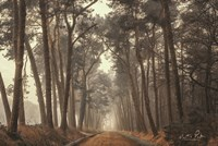 Path of Pines Fine Art Print