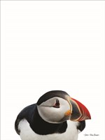 Artic Puffin Fine Art Print