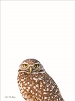 Young Owl Fine Art Print