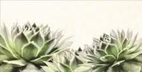 Soft Succulents I Fine Art Print