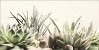 Soft Succulents II Fine Art Print