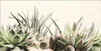 Soft Succulents II Fine Art Print