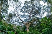 Marantaceae Forest Odzala-Kokoua National Park Congo Fine Art Print