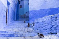 Cats in an Alley, Chefchaouen, Morocco Fine Art Print