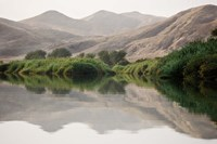 Greenery Along the Banks of the Kunene River, Namibia Fine Art Print