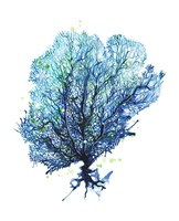Sea Fan - Aqua Fine Art Print